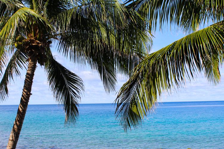 palm trees St. John, USVI