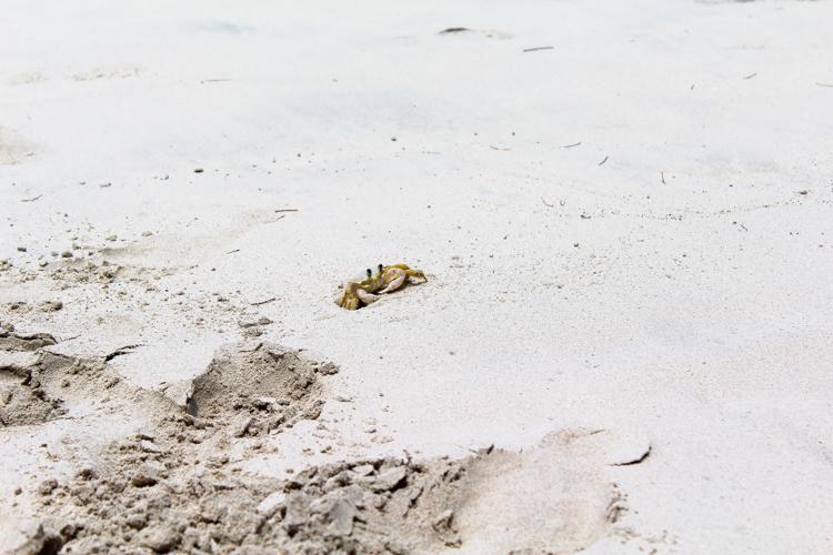 crab on St. John, USVI