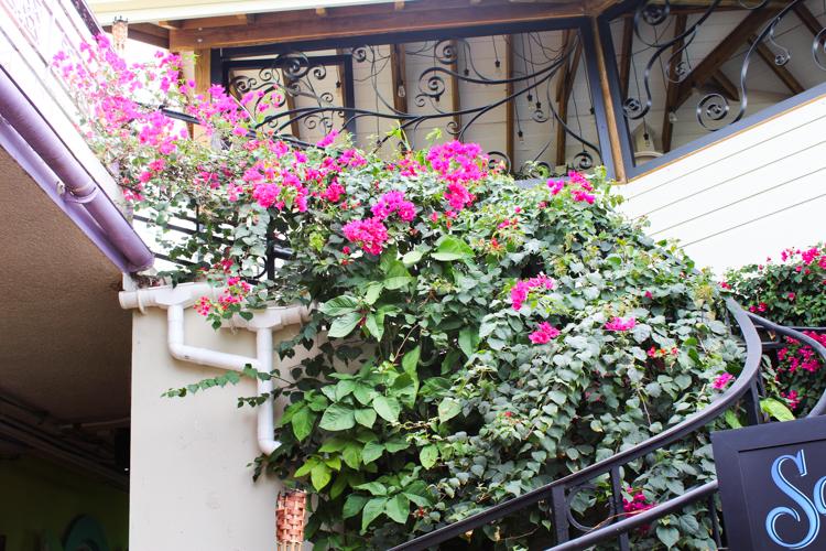 flowers of St. John, USVI
