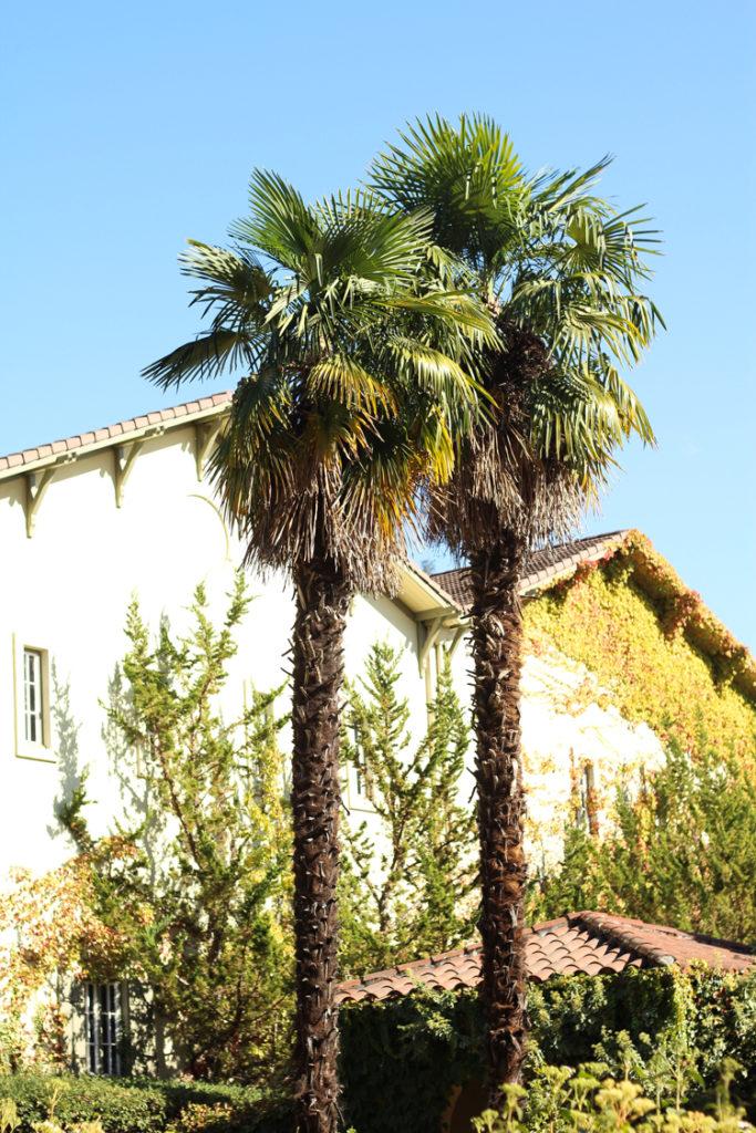 chateau st. jean, wine country, sonoma, napa valley wineries, sonoma wineries, chateau st. jean winery, california wineries,