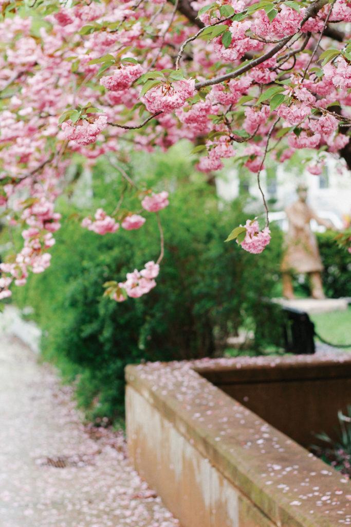 spring flowers in Boston