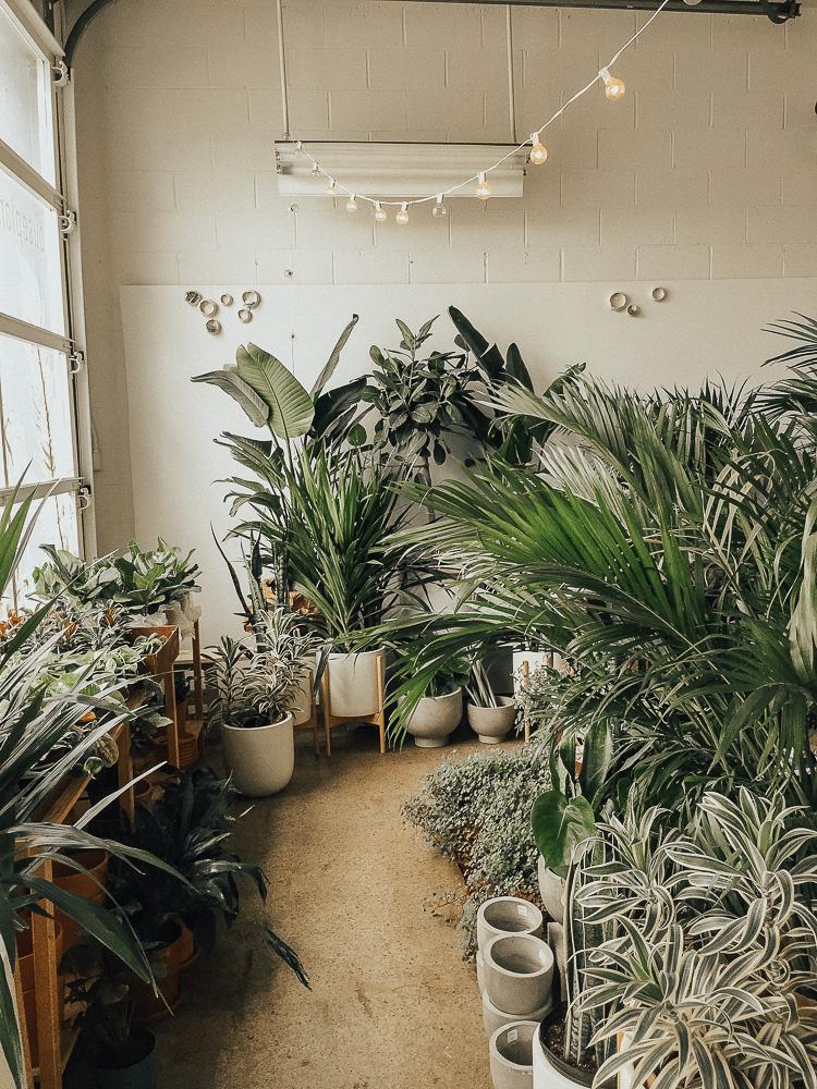 Niche Urban Garden Supply: Where to Buy Plants in Boston ...